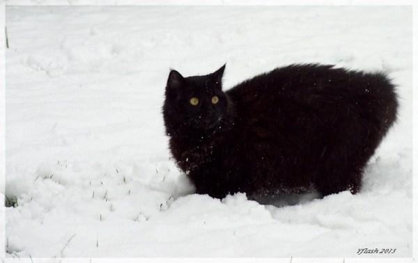 Réglisse à la neige...