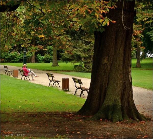 Dans le silence d'automne