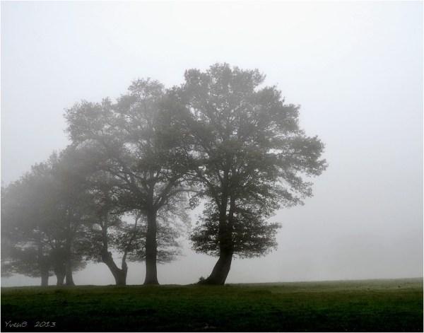 Les six l'houettes dans la brume