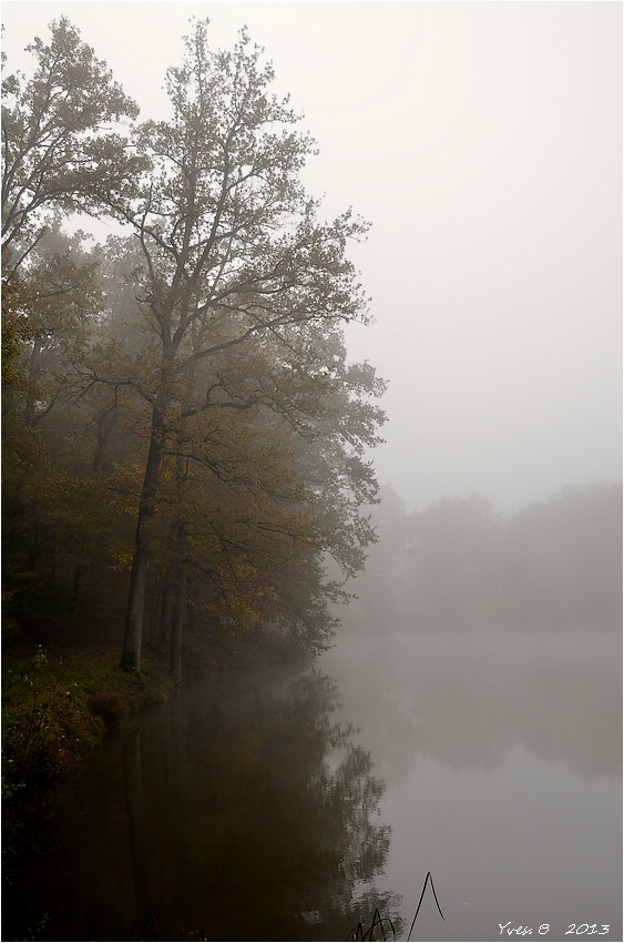 Rêve de brume 2
