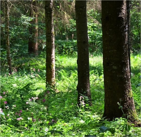 Dans l'intimité du bois  # 2