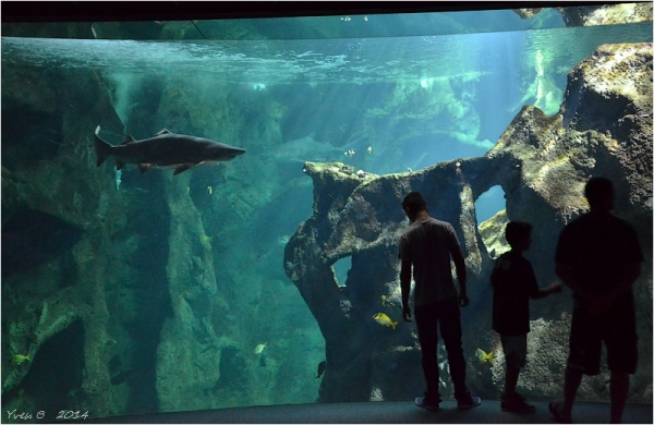 Le requin ( Aquarium # 2 )