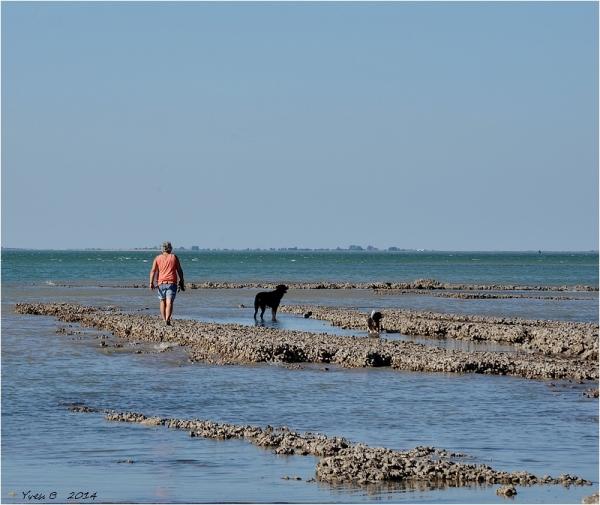 Marcher sur les huîtres sauvages.