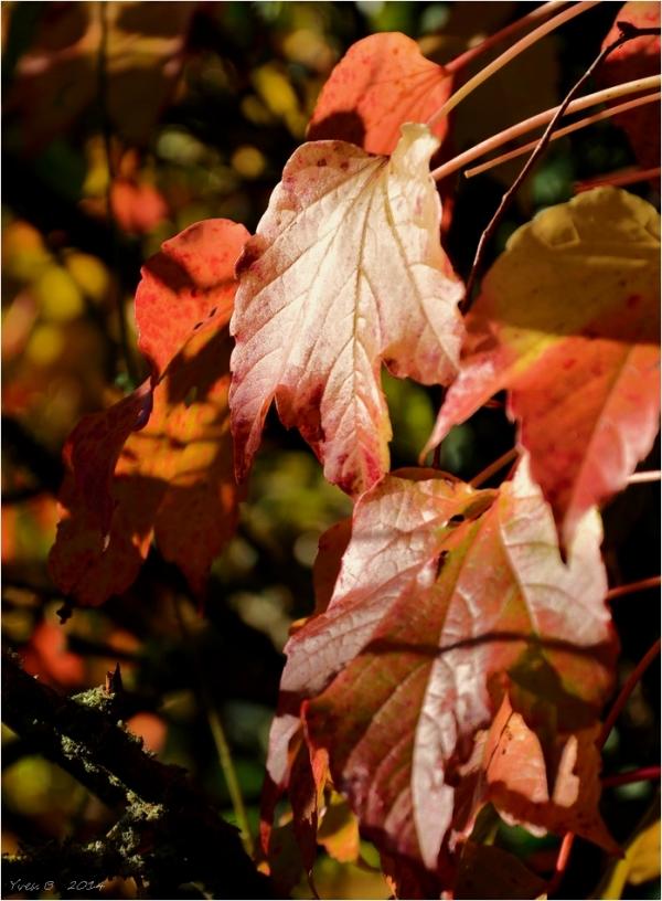 L'automne nous tend la main