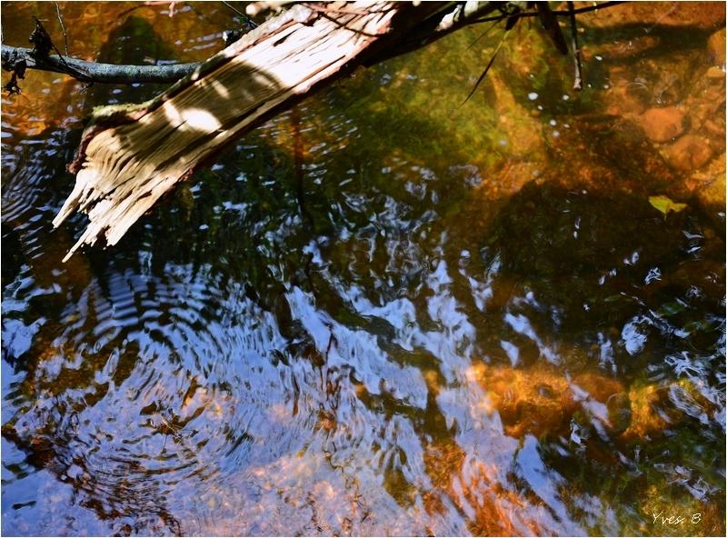Nager en eau claire