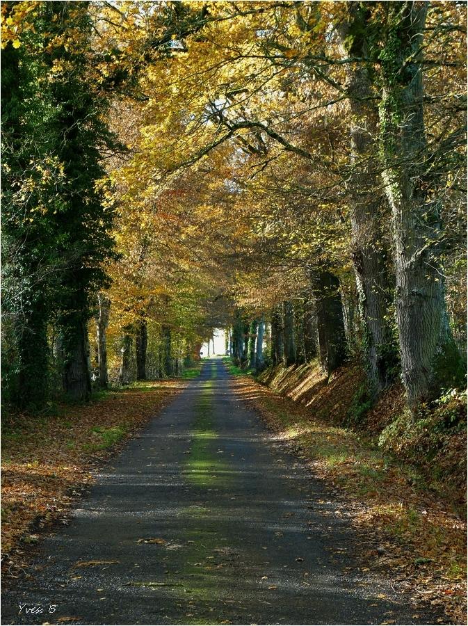 La route de campagne
