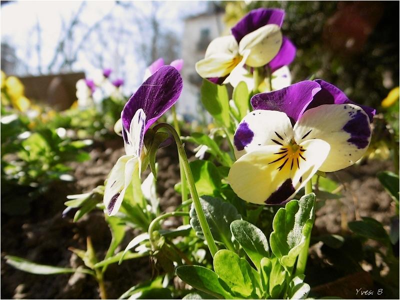 Ça fleure bon le printemps