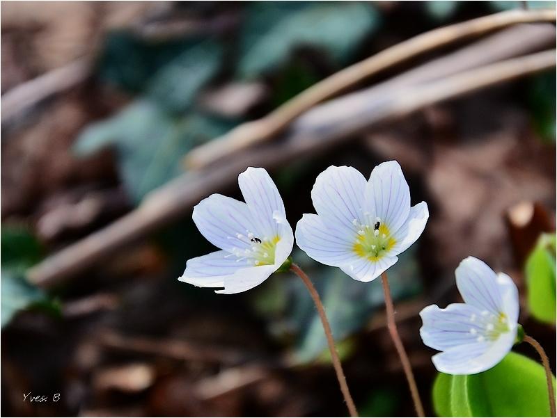 L'éveil du printemps