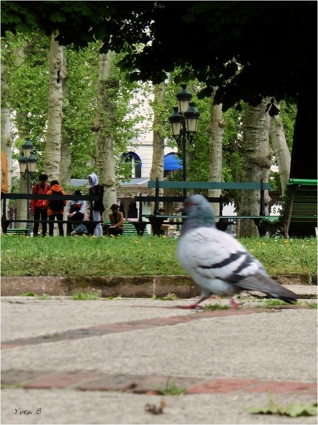 Et le pigeon passe.