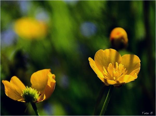 Déclinaison jaune