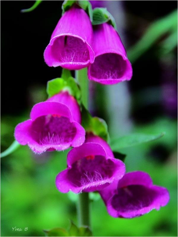 nectar intérieur