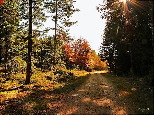 Les chemins d'automne