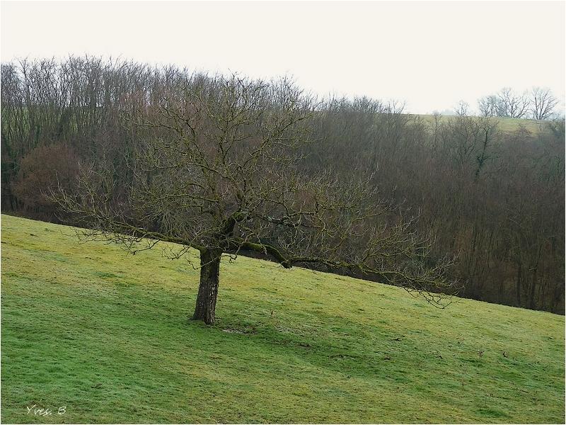 L'arbre confondu