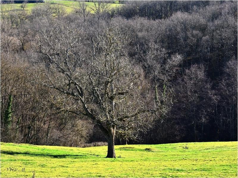 L'arbre confondu # 3