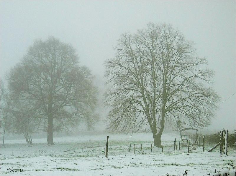 Brume neigeuse