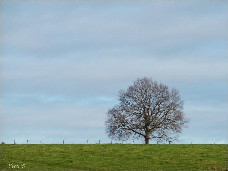 L'arbre au champ