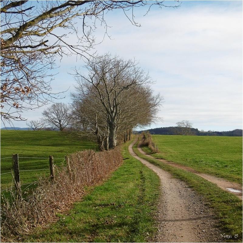 Le petit chemin