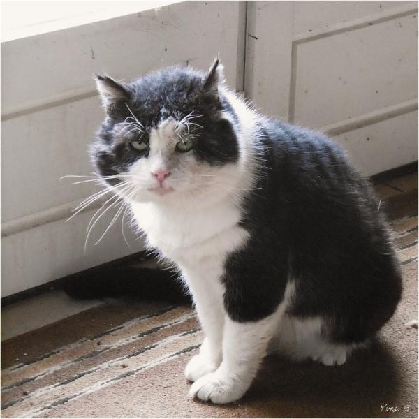 Le bonjour du chat