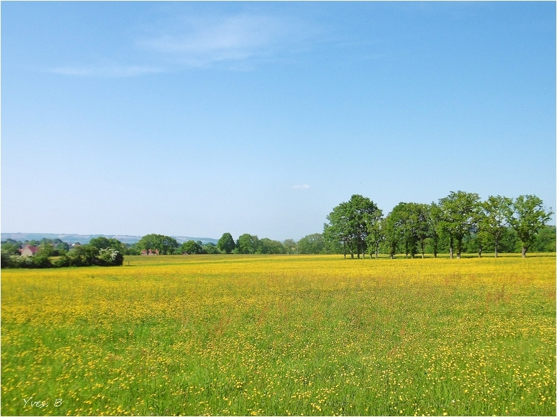 Le champ jaune