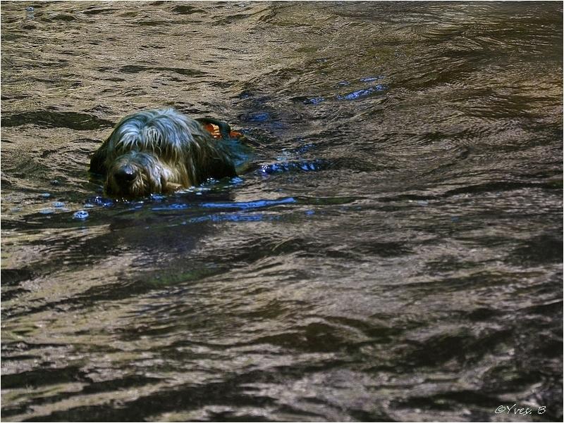 A la nage.