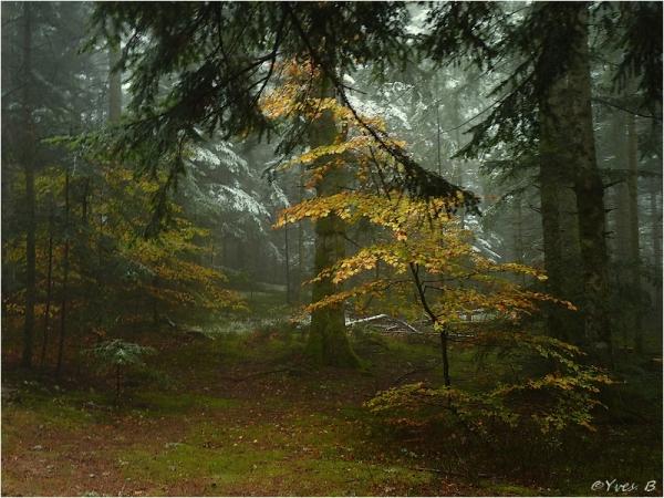 Le froid d'automne