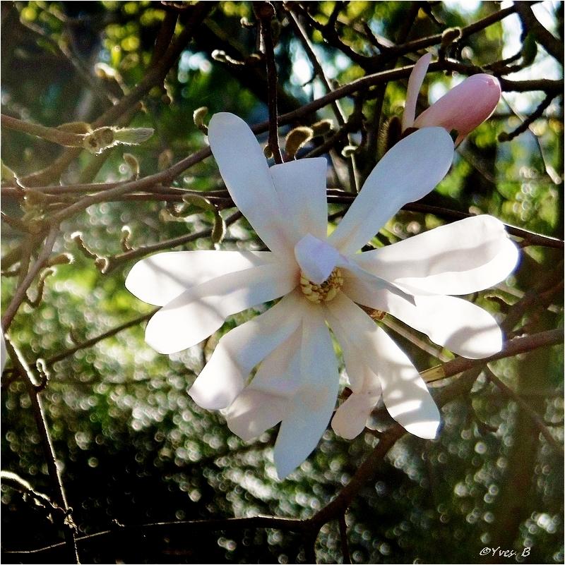 Fleuri de lumière