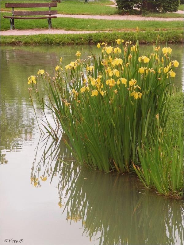 Le banc au fleurs
