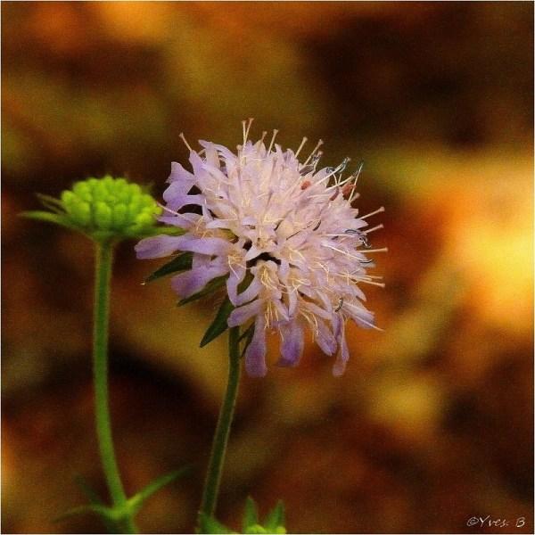 Floriture