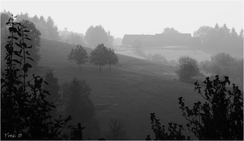 Dans la brume #2
