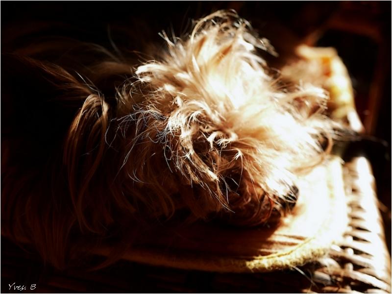 Au soleil , je dors # 2