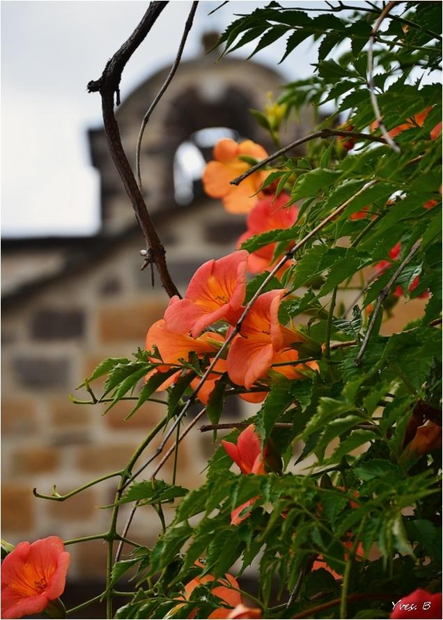 Blesle et ses fleurs