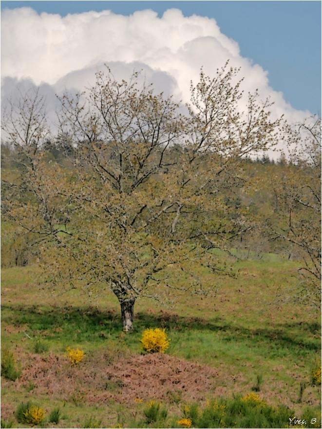 L'arbre et le genêt