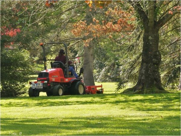 Rafraîchir la pelouse