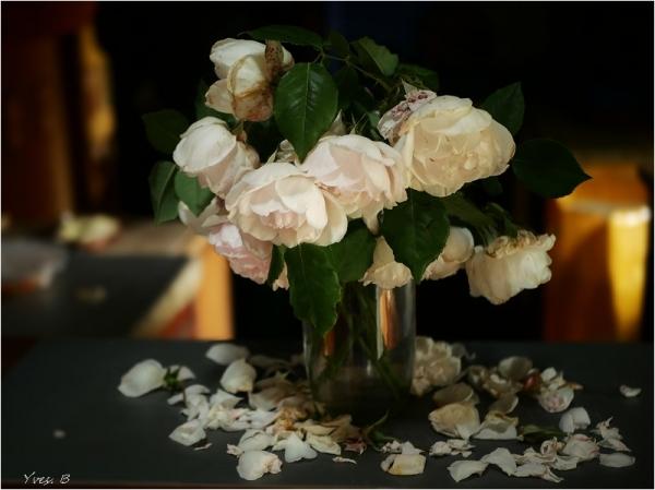 Fleurs fanées...