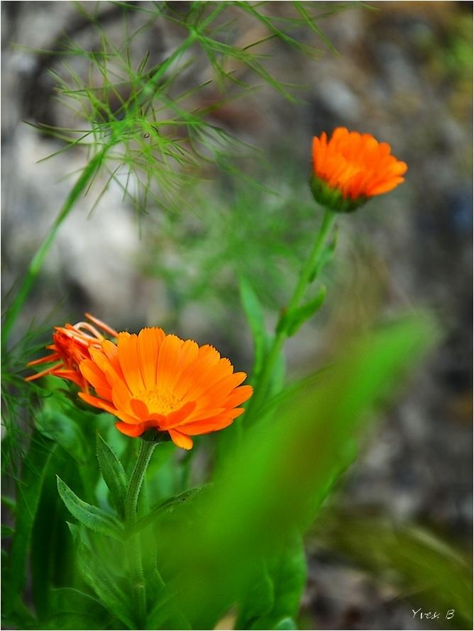 Une envie de fleur