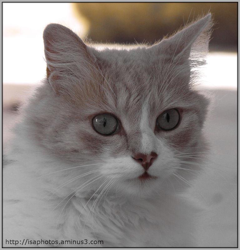 ♥ THE CAT ♥