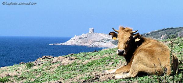 Voyage en Corse ... 12