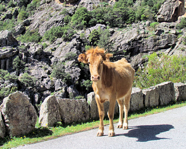 Voyage en Corse ... 13