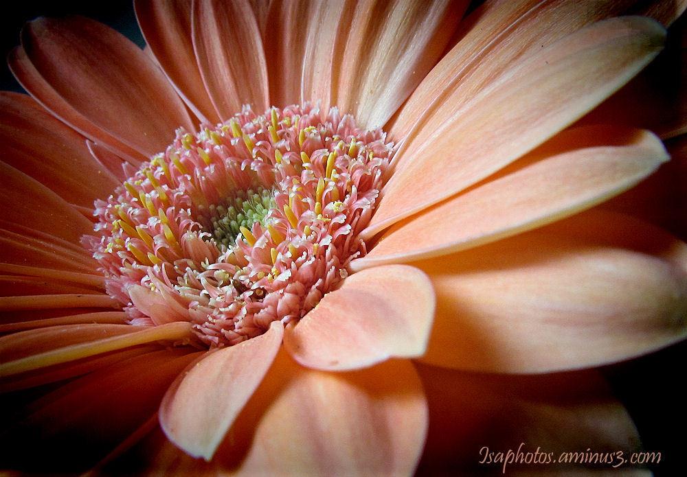 Coeur orange ...