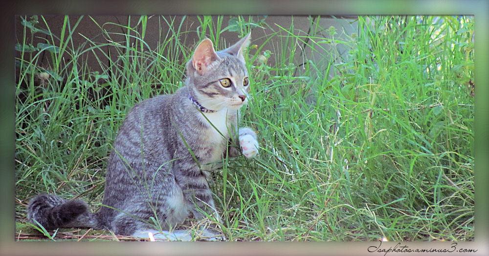 """Biscotte"" le chaton, au camping"