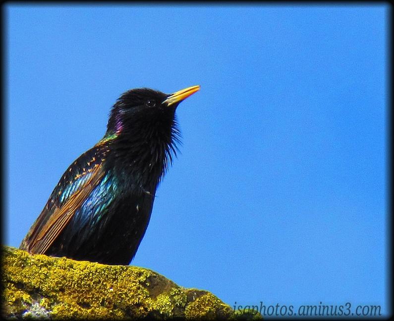 Oiseau de Bretagne