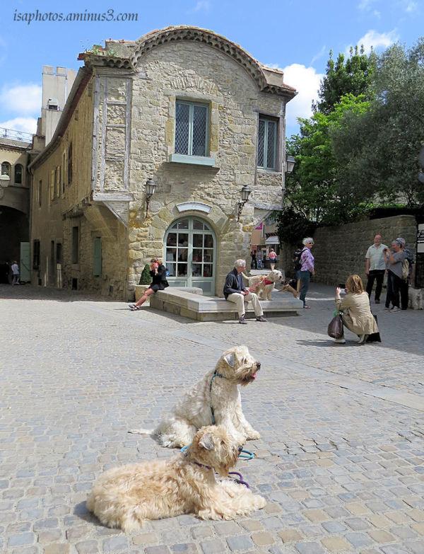 Balade dans la cité de Carcassonne
