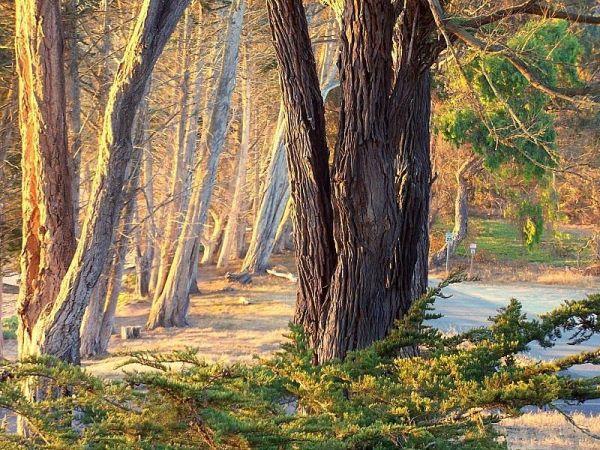 grove of trees near morro bay california