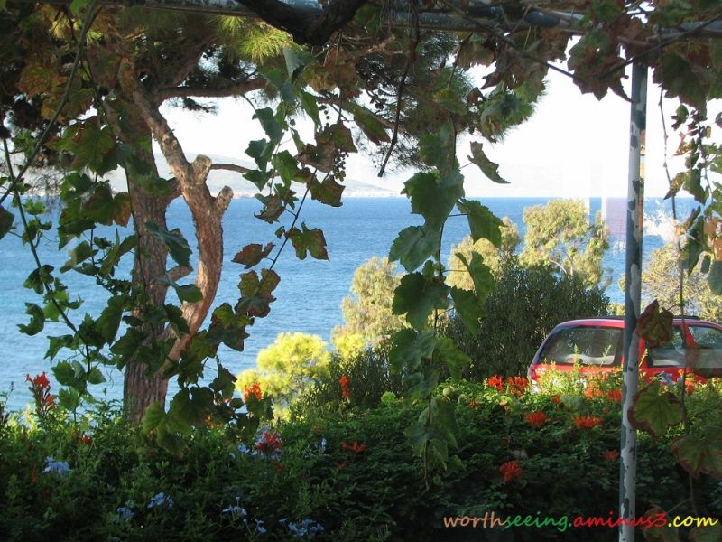 sea behind the tree...!
