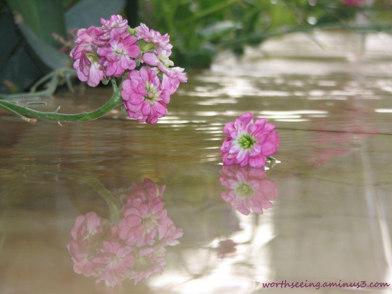 pink flower... :)