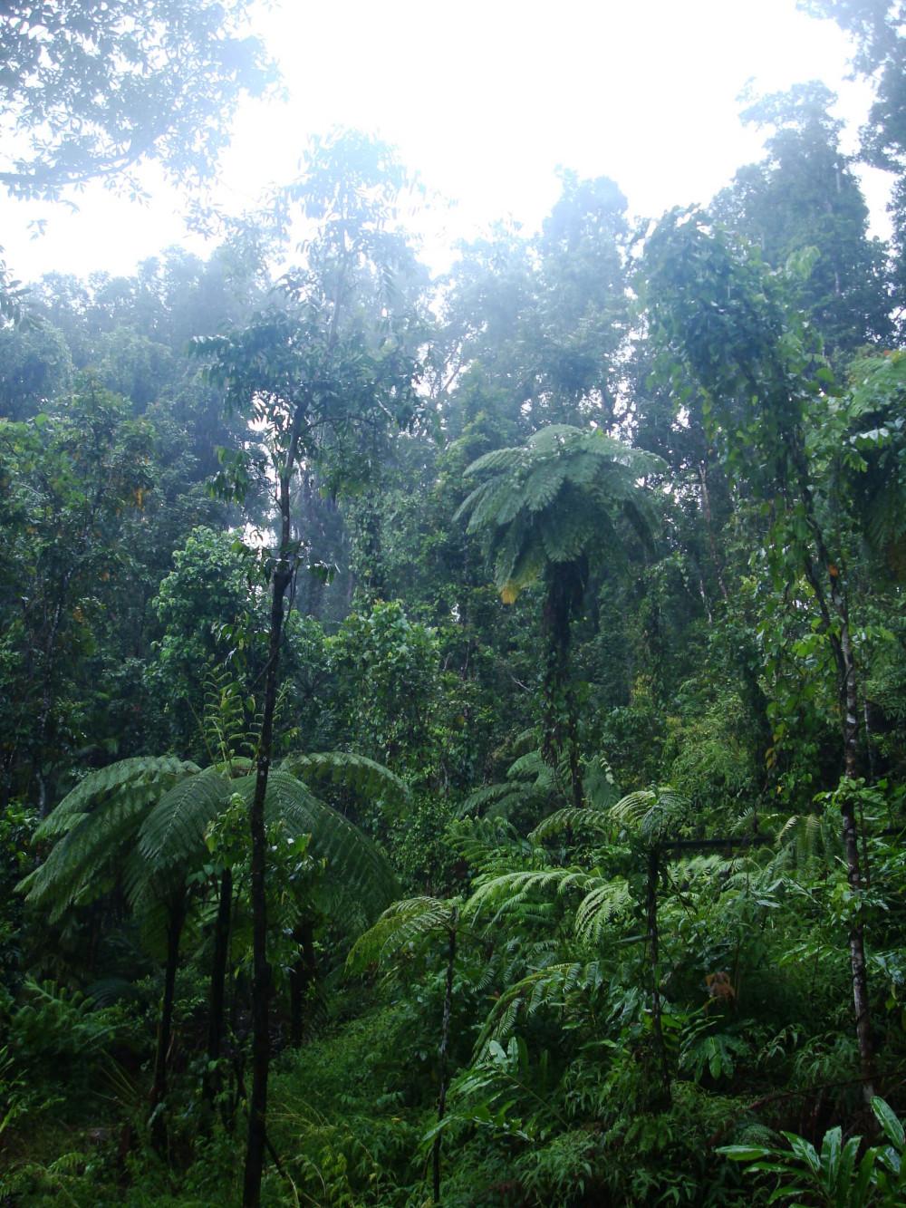 Rainforest at Atherton Tablelands