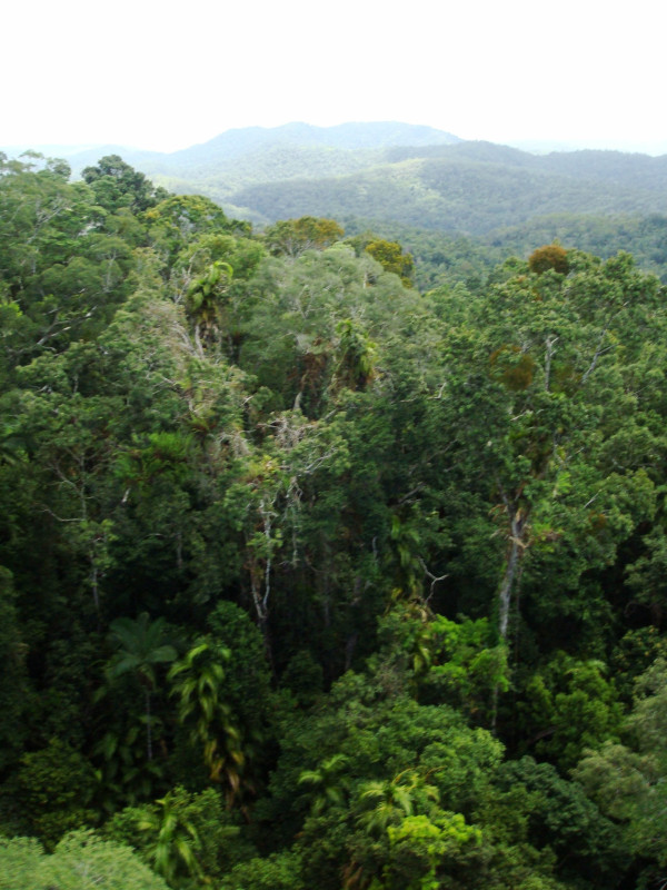 Rainforest around Kuranda