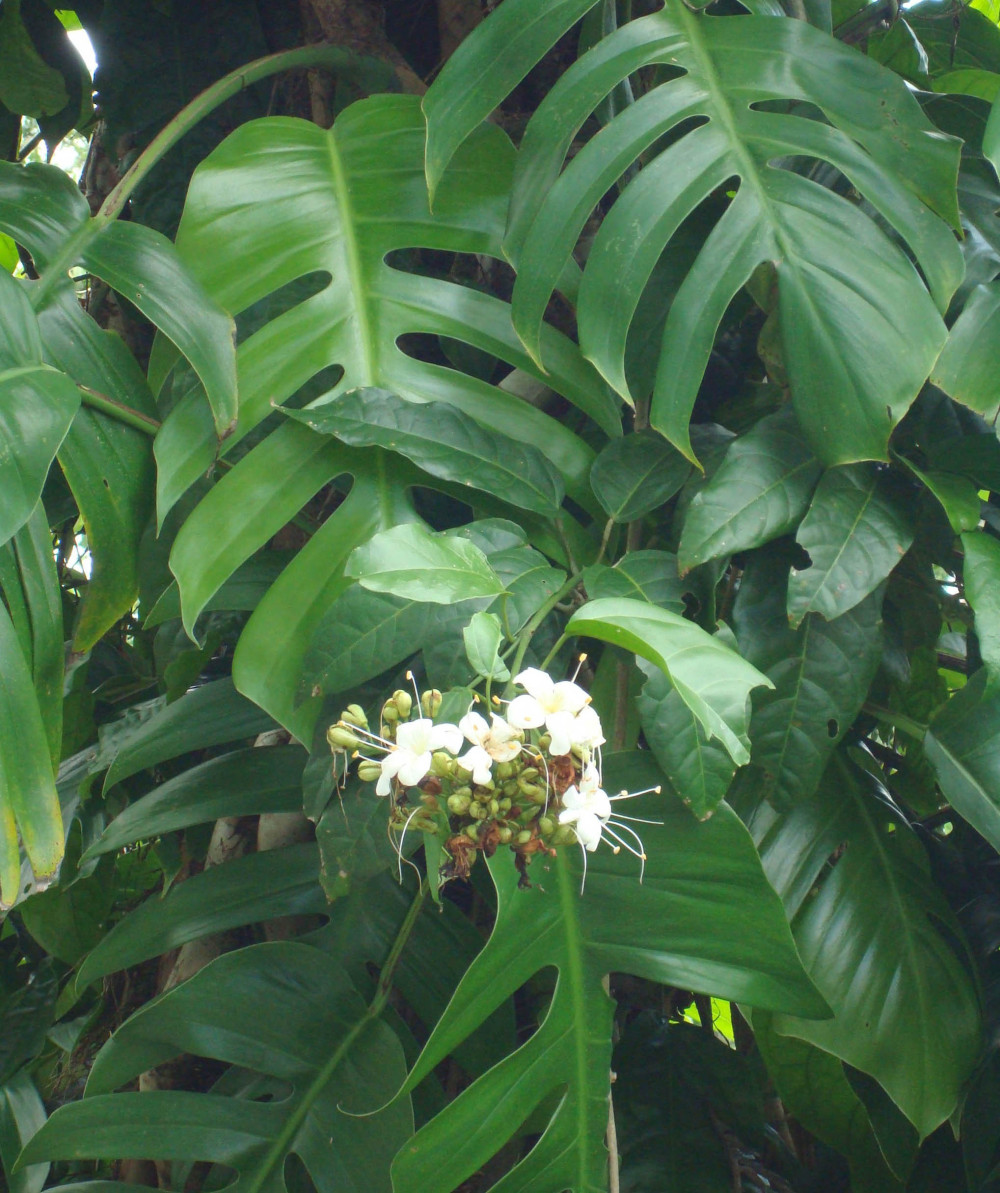 Mamu Rainforest 2