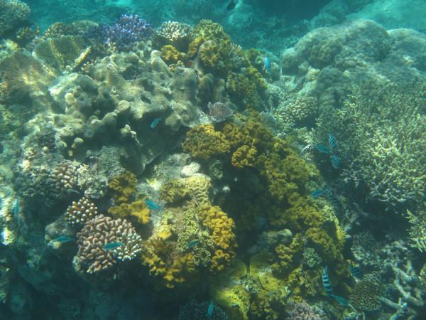 Great Barrier Reef - Under Water World 1/18