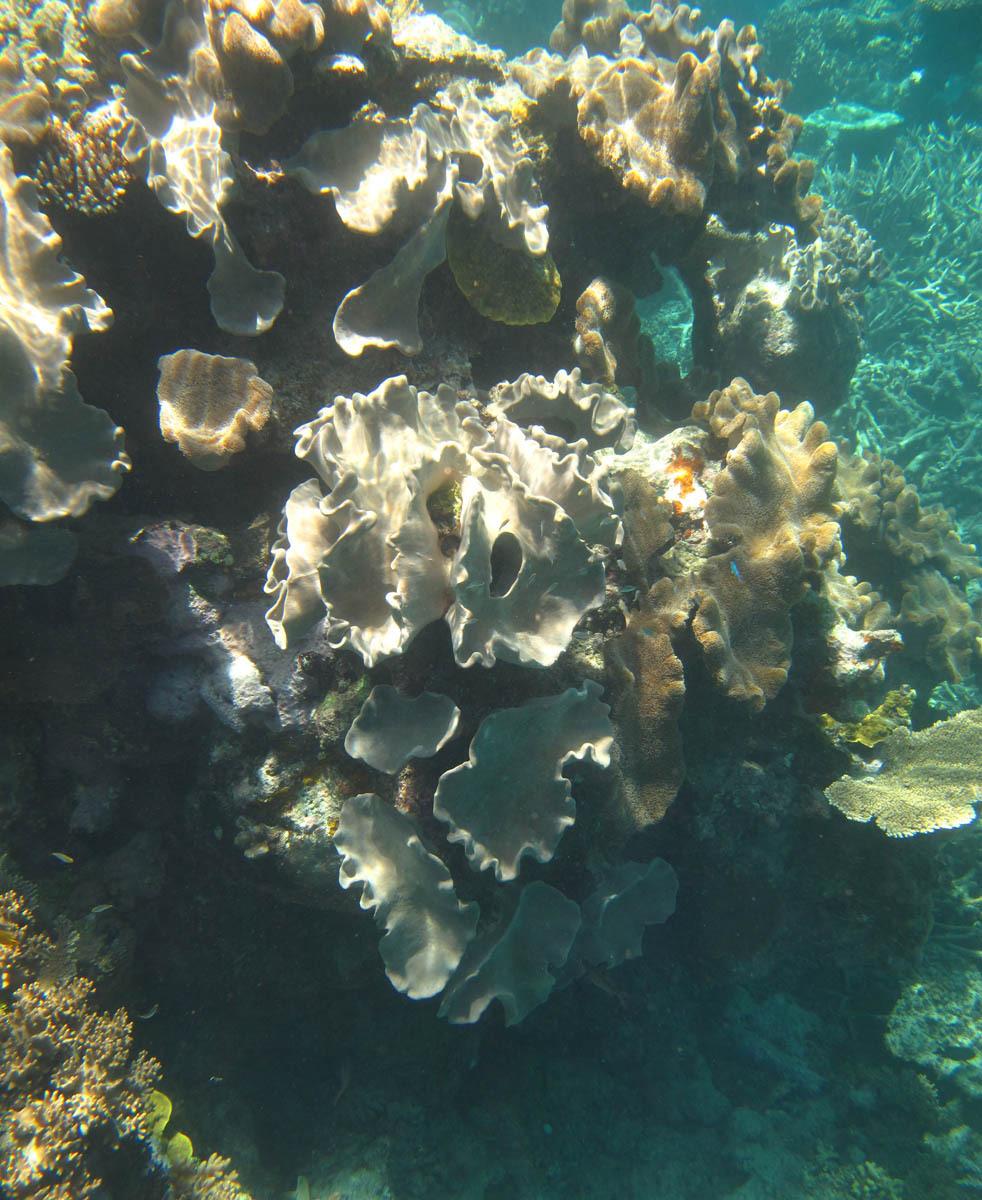 Great Barrier Reef - Under Water World 3/18